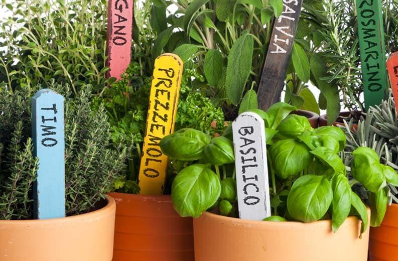 Basilico ed erbe aromatiche.jpg